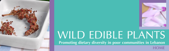 Wild Edible Plants -